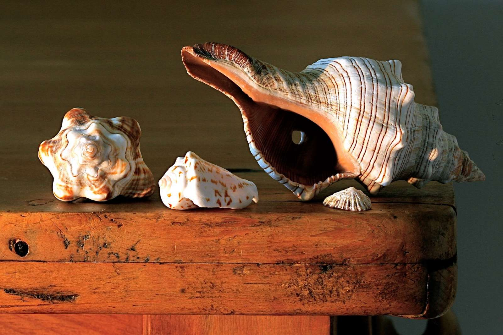La casa al mare, tra maioliche e raw design